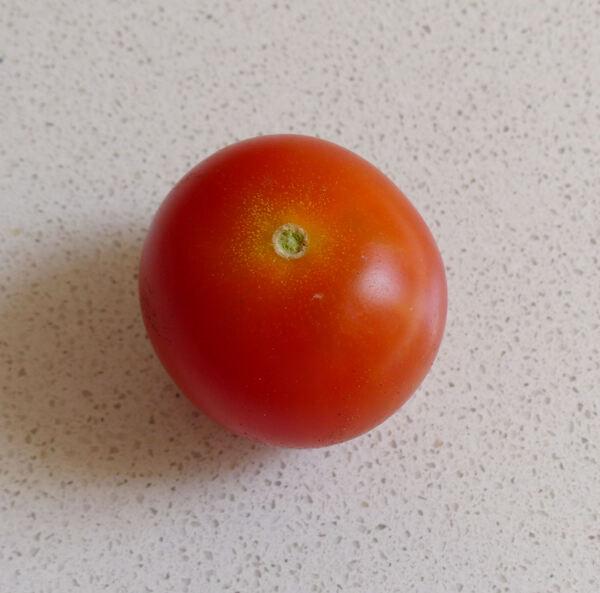 Solanum lycopersicum L. 'Genio'