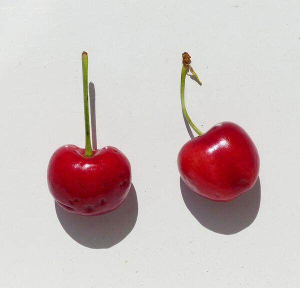 Prunus avium (L.) L. 'Bigarreaux'