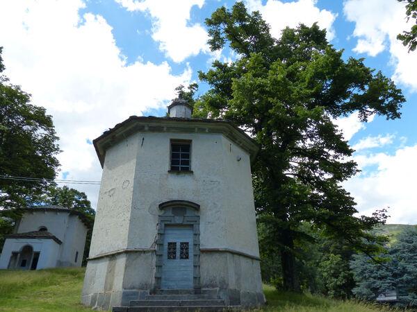 Tilia cordata Mill.
