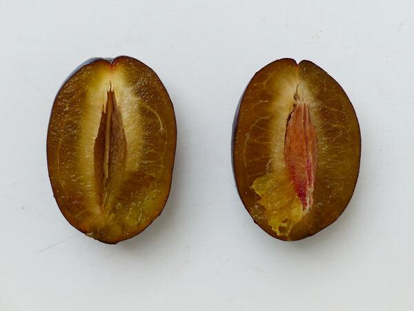 Prunus domestica L. 'Stanley'