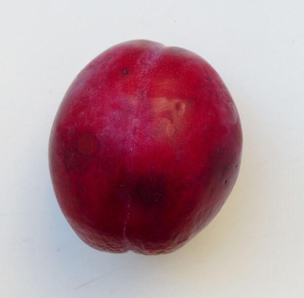 Prunus domestica L. 'Fortune'