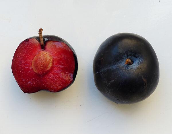 Prunus domestica L. 'Friar'