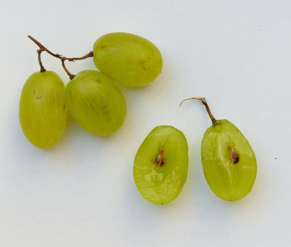 Vitis vinifera L. 'Pizzutella'