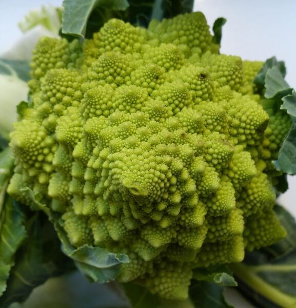 Brassica oleracea L. 'Romanesco'