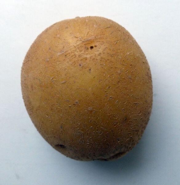 Solanum tuberosum L. 'Di Bologna DOP'