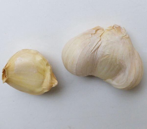 Allium sativum L. 'Di Voghiera'