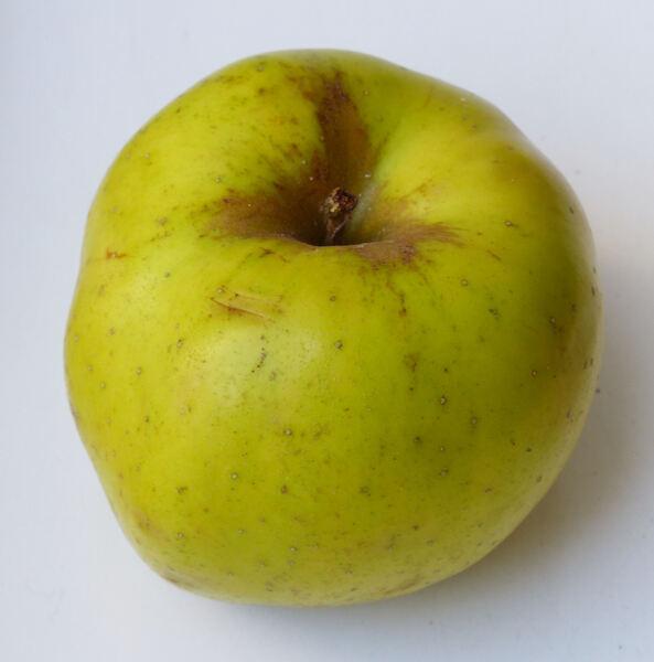 Malus domestica (Borkh.) Borkh. 'Renetta del Canada'