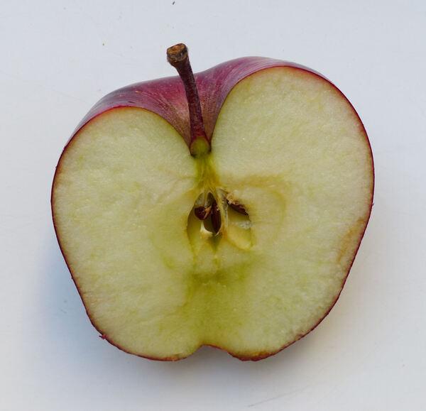 Malus domestica (Borkh.) Borkh. 'Starkspur Red Delicious'