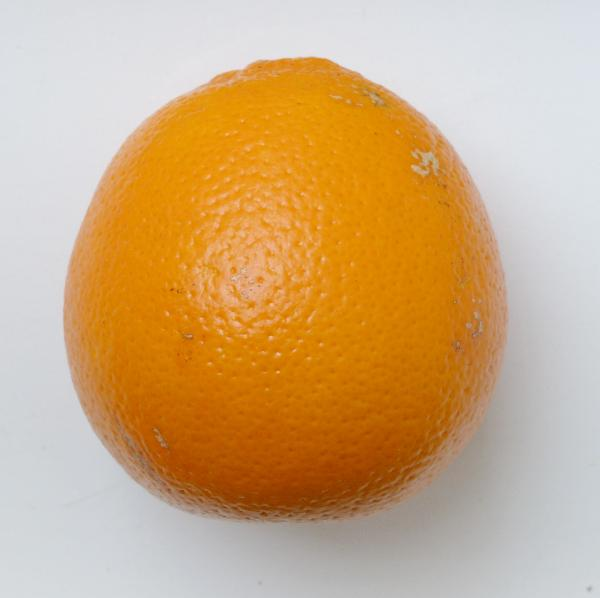 Citrus x sinensis (L.) Osbeck 'Tarocco'