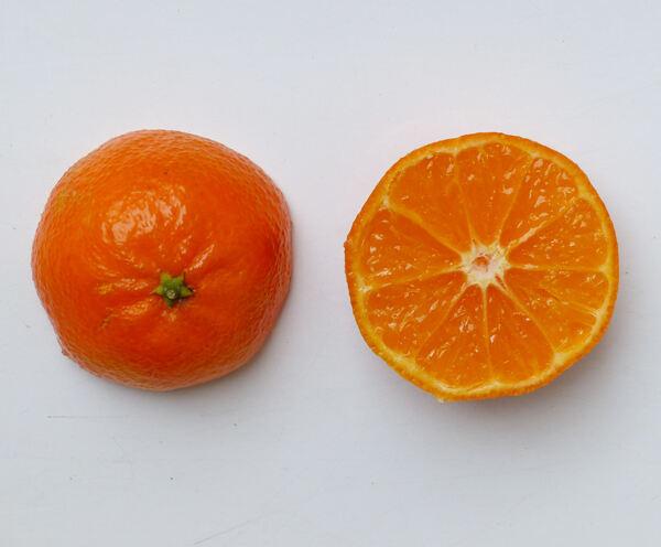 Citrus x clementina hort. ex Tan. 'Hernandina'