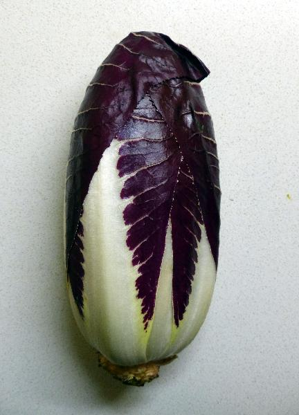 Cichorium intybus L. 'Spadone'