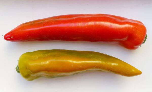 Capsicum annuum L. 'Corno di Toro'