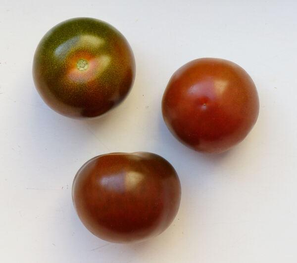 Solanum lycopersicum L. 'Camone'