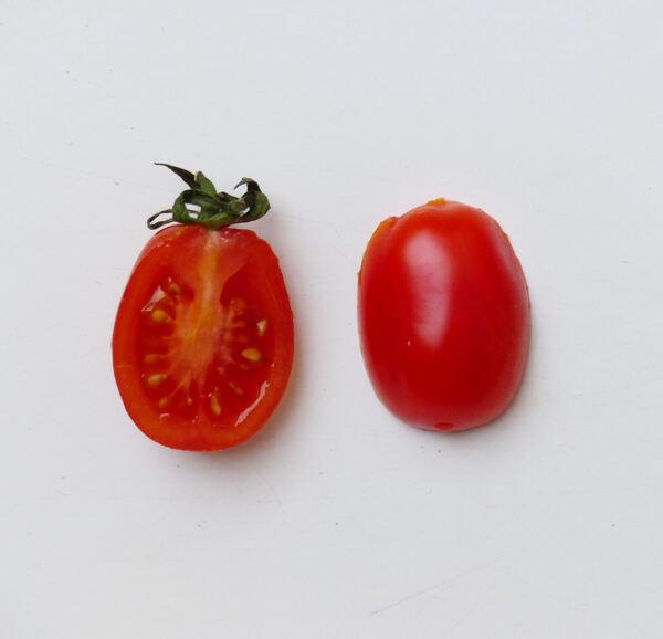 Solanum lycopersicum L. 'Datterino'
