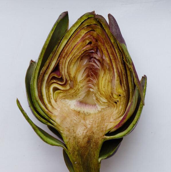 Cynara cardunculus L. 'Morettino'