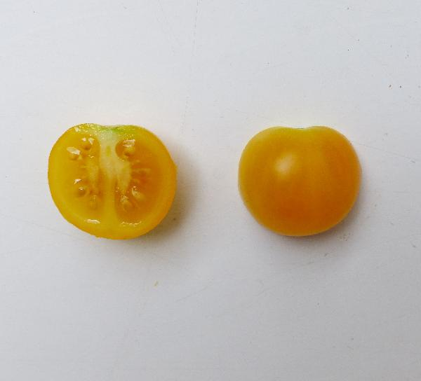 Solanum lycopersicum L. 'Ciliegino Giallo'