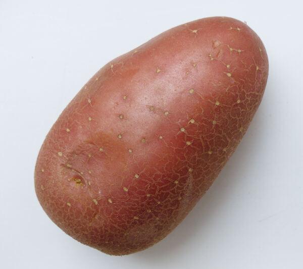 Solanum tuberosum L. 'Cherie'