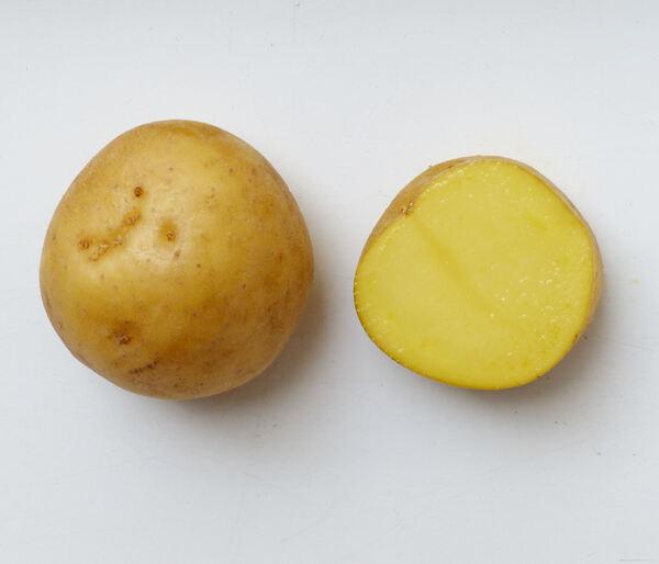 Solanum tuberosum L. 'Agata'