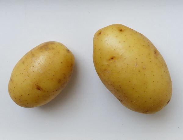 Solanum tuberosum L. 'Artemis'