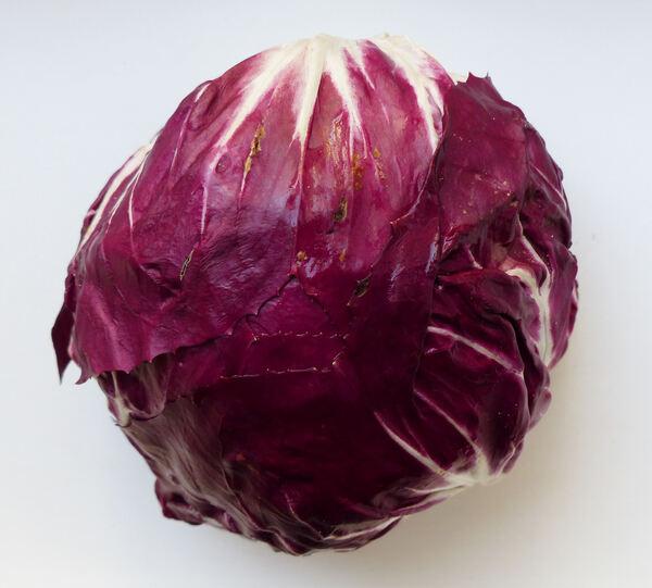 Cichorium intybus L. 'Tondo Rosso'