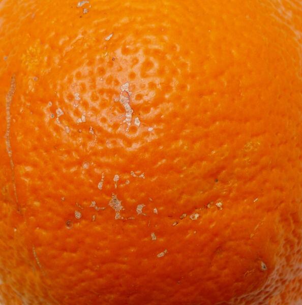 Citrus x sinensis (L.) Osbeck 'Di Ribera'
