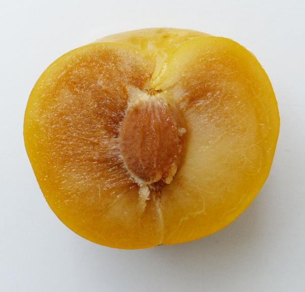 Prunus domestica L. 'Sun Kiss'