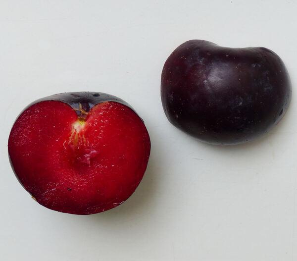 Prunus domestica L. 'Black Diamond'