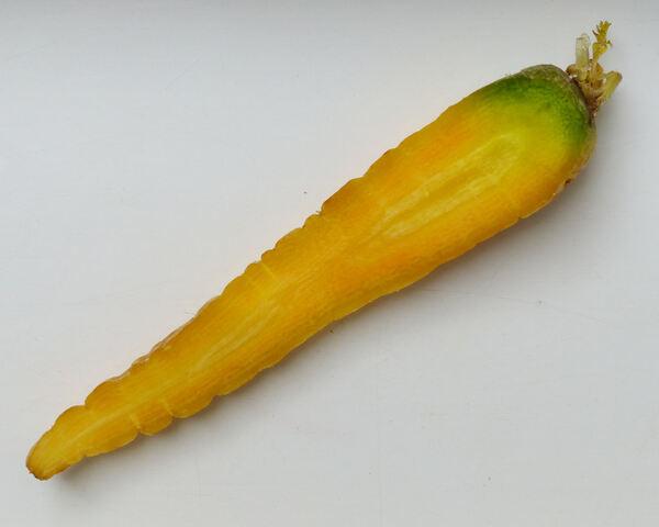 Daucus carota L. 'Gialla di Polignano'