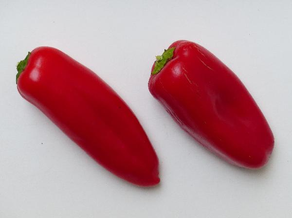Capsicum annuum L. 'Snack Red'