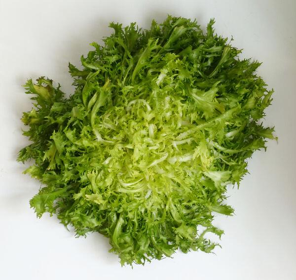 Cichorium endivia L. 'Riccia'