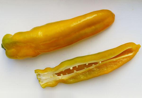 Capsicum annuum L. 'Cornetto Giallo'
