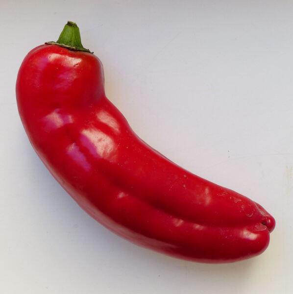Capsicum annuum L. 'Cornetto Rosso'
