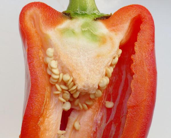 Capsicum annuum L. 'Cornelio Rosso'