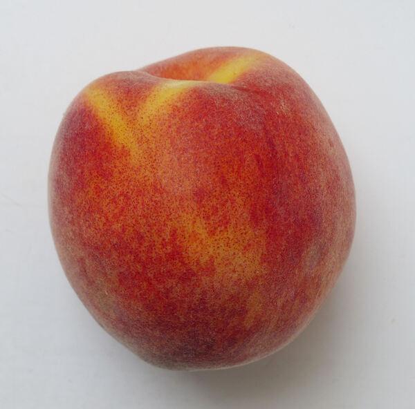 Prunus persica (L.) Batsch 'Rich May'