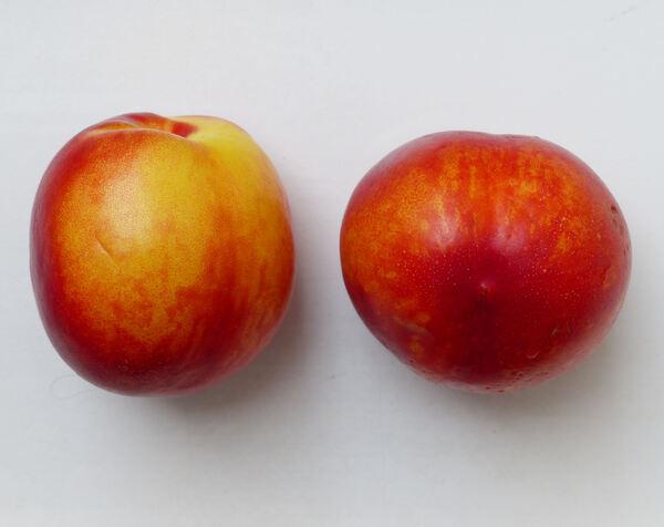 Prunus persica (L.) Batsch var. nucipersica (Borkh.) C.K.Schneid. 'Garofa'