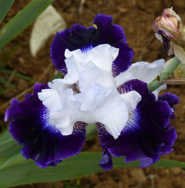 Iris 'Cleared for Takeoff'