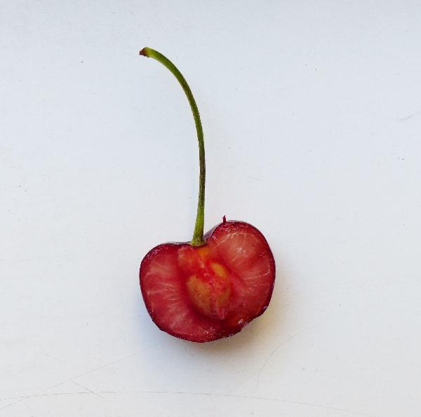 Prunus avium (L.) L. 'Giorgia'
