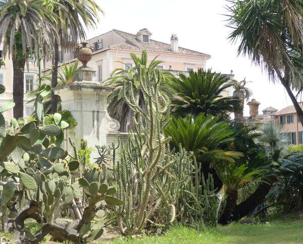 Opuntia imbricata (Haw.) DC.