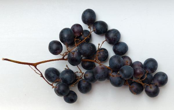 Vitis vinifera L. 'Summer Royal'