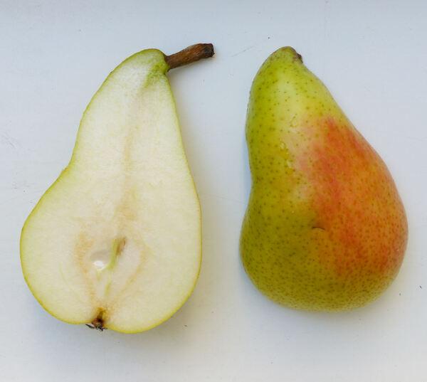 Pyrus communis L. 'Limone'
