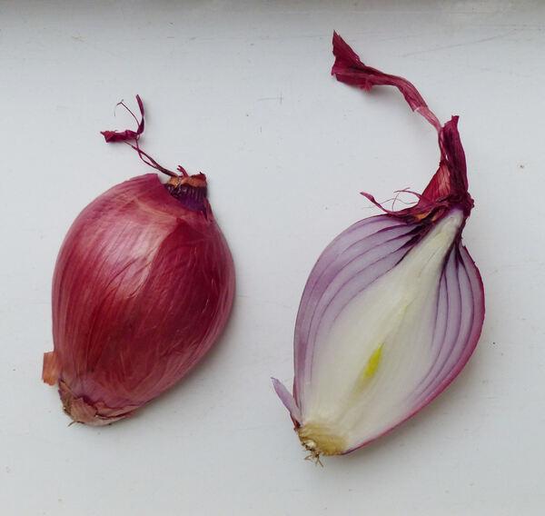 Allium cepa L. 'Rossa di Tropea'