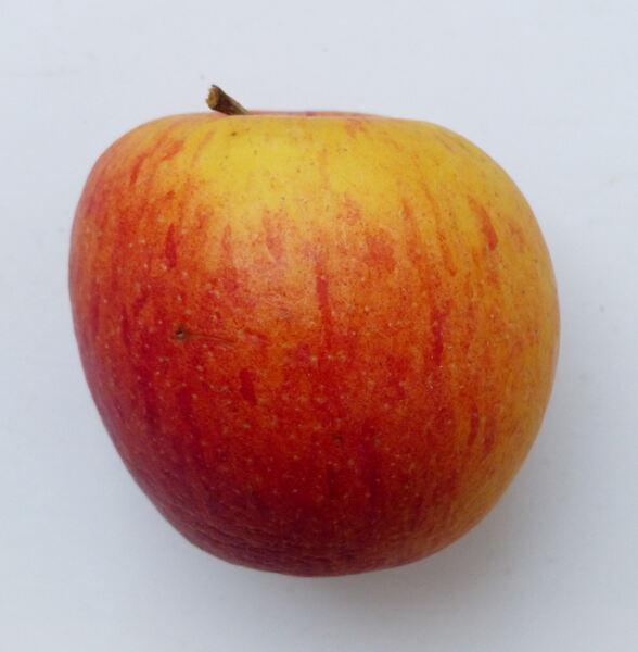 Malus domestica (Suckow) Borkh. 'Braeburn'