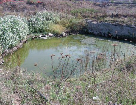 Persicaria senegalensis (Meisn.) Soják
