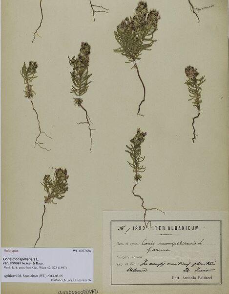Coris monspeliensis L. subsp. annua (Halàcsy & Bald.) Arrigoni