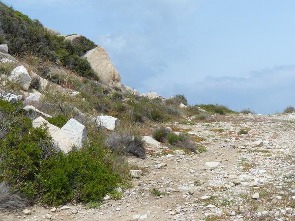 Limonium retirameum Greuter & Burdet subsp. retirameum