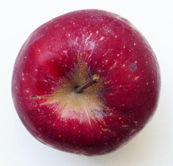 Malus domestica (Borkh.) Borkh. 'Kissabel'