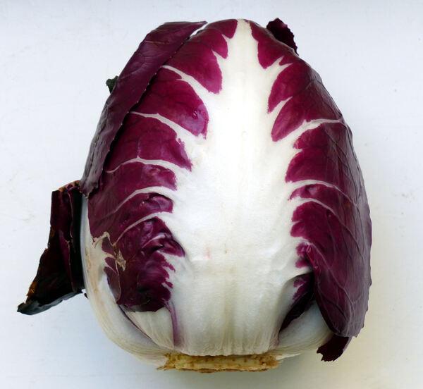 Cichorium intybus L. 'Rosso di Verona IGP'