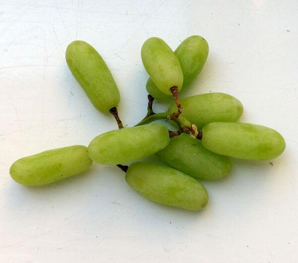 Vitis vinifera L. 'Sonaka'