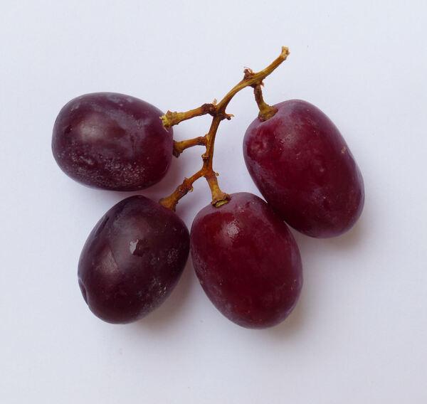 Vitis vinifera L. 'Crimson'