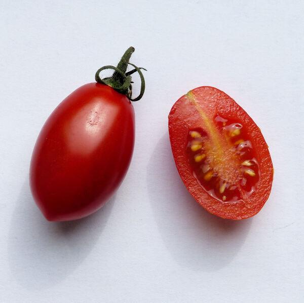 Solanum lycopersicum L. 'Solarino RZ F1'